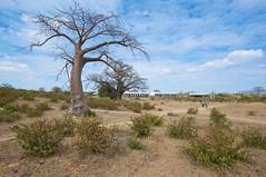 Escola Comercial Martires de Wyriamu (Antonio Klaus) Tags: africa school outdoors nikon nikkor mozambique tete baobab businessschool embondeiro d700 1424mm