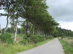 Brachmont Wood near Denside (lapsuskalamari) Tags: road wood uk norway mystery scotland guess picture location hedge plantation guessed minor spruce beech kincardineshire guesswhereuk gwuk guessedbydrewhound denside brachmont tarmacadamed