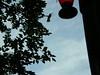 Humming Bird (boisebluebird) Tags: flowers summer plants garden landscape design boise patio garening michaeltoolson boisebluebirdcom httpwwwboisebluebirdcom boiselandscaping boisegardener