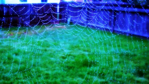 playing with the web by A writer afoot