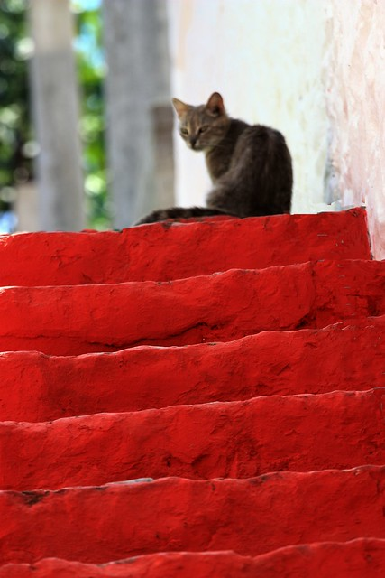 Red steps with cat