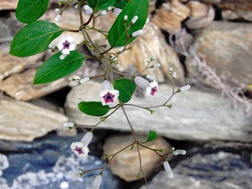 Flower-042