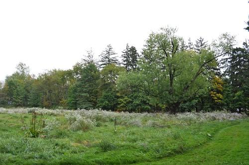 Field Near Hugenot Street