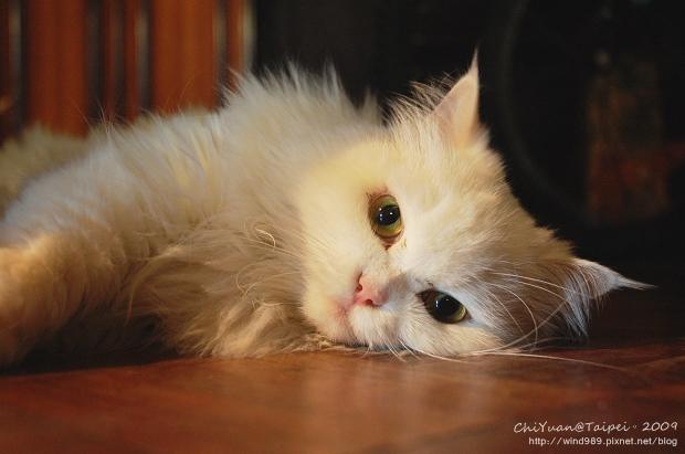 [叮叮]Cat。橫轉的世界01.jpg
