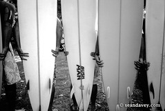 A group of surfers with their surfboards at the Eddie Aikau ceremy at Waimea Bay, on the north shore of Oahu, Hawaii. (Sean Davey Photography) Tags: b blackandwhite bw usa horizontal hawaii hands surfers surfboards fins surfart sunsetsurf surffun beachscenery surffriends happysurf seandavey ackandwhite beachphotograph surflifestyle surfpeople surfnorthshore surfersphotographs imagessurf surfimage waimeabaynorthshore surfphotosart