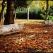 Autumn garden - Jardim de Outono