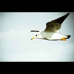 Gull I (manganite) Tags: blue sky orange black color colors birds animals clouds digital photoshop catchycolors germany geotagged nikon colorful europe bonn tl iso400 framed stripes gulls vivid frame highsaturation d200 f56 nikkor dslr lightroom northrhinewestphalia nikond200 18200mmf3556 manganite 12500sec graurheindorf date:year=2006 repost1 date:day=1 date:month=november format:ratio=32 format:orientation=landscape 12500secatf56 geo:lat=50768256 geo:lon=706872