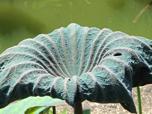 IMG_9590 Lotus Leaf , 荷叶