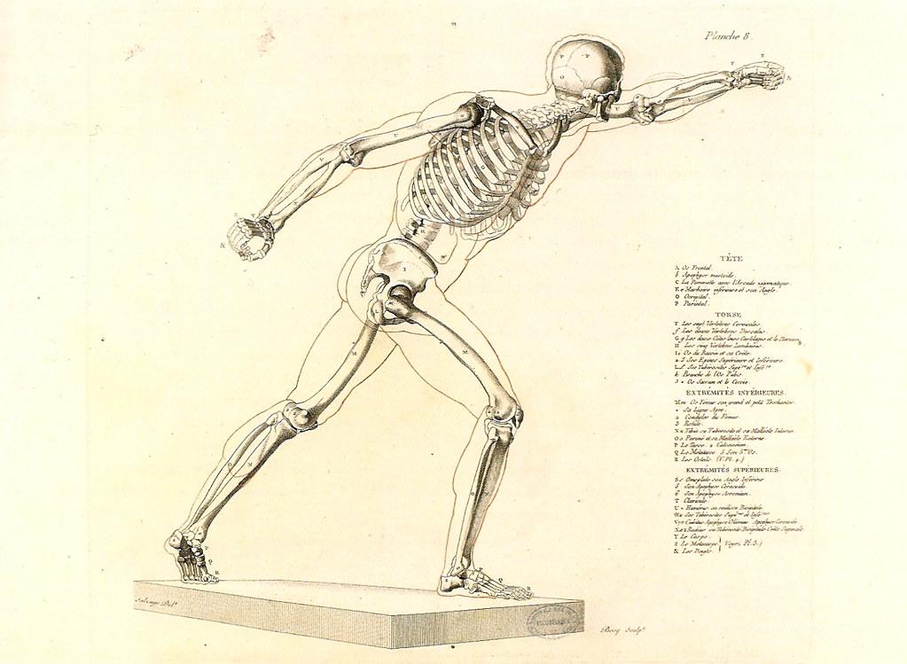 Jean Bosq (1812-1830?) Squelette du Gladiateur combattant from Anatomie du Gladiateur combattant, applicable aux beaux-arts, ou Traité des os, des muscles, du mécanisme des mouvements, des proportions et des caractères du corps humain, Paris, chez lAuteur, 1812. École des Beaux-Arts, Paris.