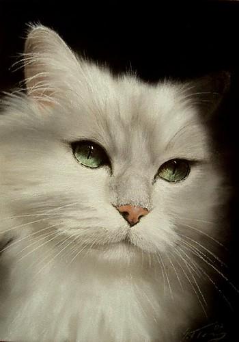 white cat 364 von Nordlichter4.