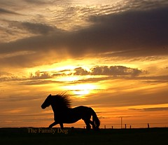 caballo (The Family Dog) Tags: sunset sky horses horse netherlands silhouette canon caballo caballos photography evening fries ameland cavalo equine paard paarden frisian galope friese tropilla flickraward theunforgettablepictures obramaestra