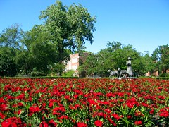 Red Flowers at the University of Oklahoma (allisonmeier) Tags: flowers red oklahoma norman ou universityofoklahoma supershot