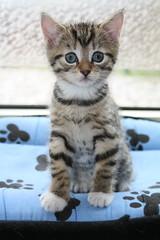 Smagol (Ruamh) Tags: cats pets cute animals cat kitten kittens smagol bestofcats ruamh 5boc mmmilikeit boc0609 bestofspecialpetportraits