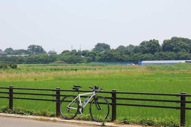 膝子の火の見櫓(さいたま市見沼区):加田屋新田より