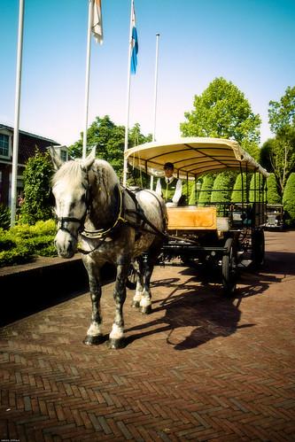 R0015624 : White horse's wagon :)