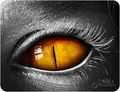 Courage is not the lack of fear but the ability to face it. (Naj ( Desired Hopes  )) Tags: white black colour reflection art digital photography amazing interesting scary eyes nikon eyelashes very surreal front explore page afraid frontpage 2009 matte masterpiece naj d300 captivating nouse etes najy explroe alemdagqualityonlyclub najyt