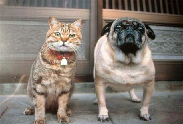 cats&dogs_20