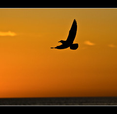 Peace.......... (Kerri Afford) Tags: ocean sunset bird beach water birds silhouette evening challengeyouwinner