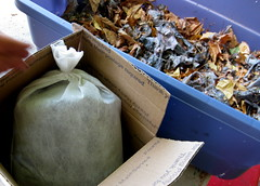 Worm Farm (Kristianna) Tags: worm compost vermiculture composting