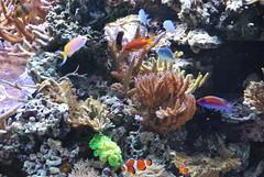 DSC_0279 (bobosh_t) Tags: fish washingtondc smithsonian naturalhistorymuseum aquaticlife