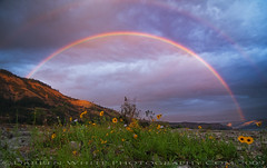 Columbia River Rainbows (Darren White Photography) Tags: morning flowers sky nature clouds oregon sunrise rainbow nikon columbiagorge d300 alemdagqualityonlyclub vosplusbellesphotos