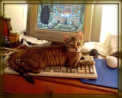Jewel Quest Cat (Zinaida Beaumont (lot of work at the office)) Tags: cats computer chats melly ordinateur kittycats jewelquest