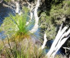 Dawn Light 1.4 (tteerriitt) Tags: light water dawn bush albany westernaustralia sunbeams morningwalk nativegrass grasstrees paperbarktrees kalganriver