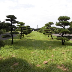 Mizumoto Park 03