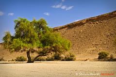 _SRN9267 (` bluechip®) Tags: trees kubo saudiarabia edgeoftheworld bluechip sigma1770mmdcmacro katutubo nikond300 sherwinnora jubayla