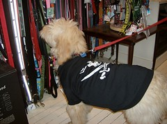 Finn shopping in his pirate t-shirt (Metro Hound) Tags: tag tshirt tags add pirate his finn