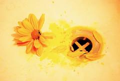 Resistirse (ARACELOTA) Tags: orange flower yellow paint flor drain naranja amarilla flickraward