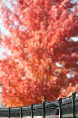 Autumn is Ultimately Untouchable. ({Salt of the Earth}) Tags: fence bokeh indescribable untouchablefall itssobeautifulyoucantevenbegintograspthegloryofitscreator