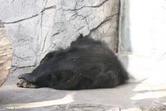 IMG_7343 (iris66de) Tags: zoo urlaub 2009 frankfurtmain