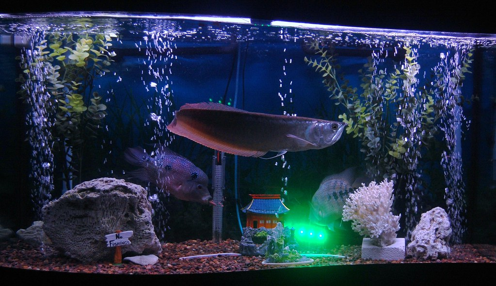 What 39 s inside your fish tank page 51 nasioc for Plenty of fish rochester ny