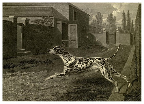 026-Dalmata-The sportsman's repository 1845- John Scott