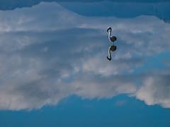 Povera Sardegna! (Topyti) Tags: sardegna geotagged sardinia laguna fenicotteri stagno fenicottero macchiareddu santagilla sagentiarrubia geo:lat=3922115 geo:lon=9044452