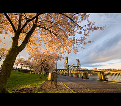 Cherry Blossoms (Jesse Estes) Tags: portland riverfront cherrybossoms jesseestesphotography