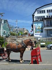 Lunenberg horse & signs