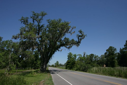 Great cycling on Hwy 182 towards Houma, LA