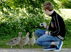 Me too... Me too...! (Kirsten M Lentoft) Tags: camera boy birds geese spring son goose waterfowl mads utterslevmose mywinners kirstenmlentoft