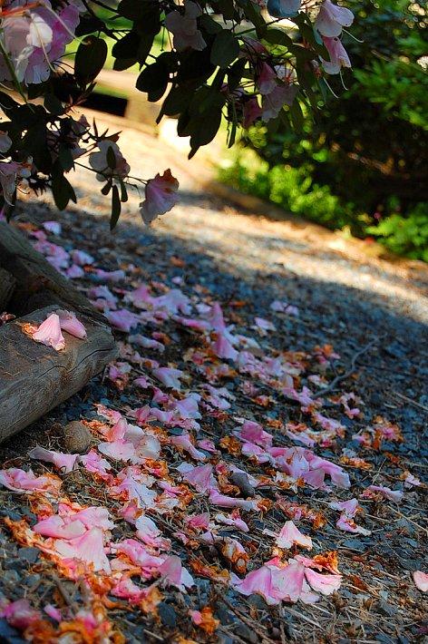 Fallen Blooms4