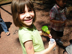 7 - Sophie and the Lorikeet