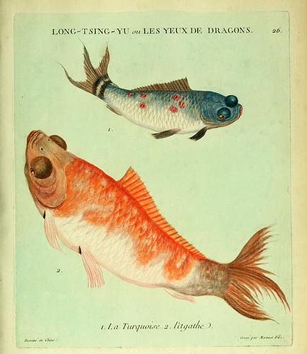 012- La Turquesa y el Agata-Histoire naturelle des dorades de la Chine-Martinet 1780