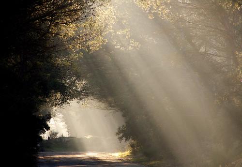 フリー画像| 自然風景| 太陽光線| 森林/山林| フランス風景|       フリー素材|