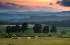 Drumlanrig castle, Upper Nithsdale (Kenny Muir) Tags: castle landscape scotland countryside sheep sony lambs dumfries drumlanrig thornhill a900 homersiliad