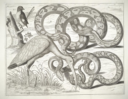 snake and ibis-like bird