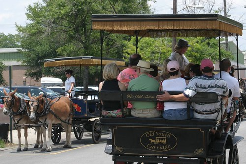 More carriages. Charleston dwntwn.