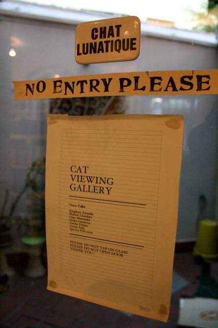 Cat Viewing Gallery