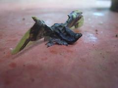 more moth. moth madness!! (rr0cketqueen) Tags: costarica concepcion choza lachozadelmundo