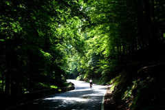 A Peloton of One (OneEighteen) Tags: bicycle rider road woods spain picosdeeuropa